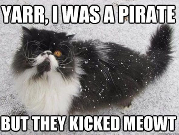 Talk like a pirate day cat
