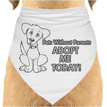 Adopt Today
